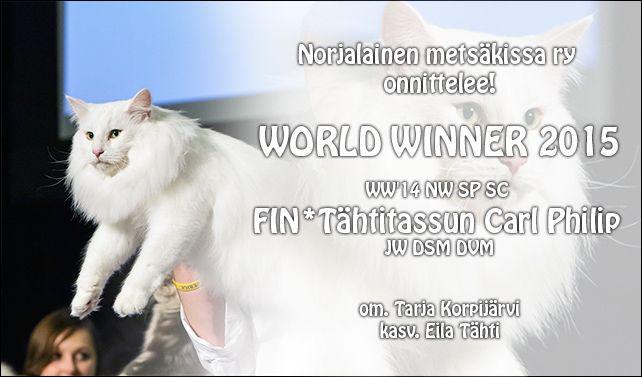 Norjalainen Metsäkissa ry - Finnish Norwegian Forest Cats Society