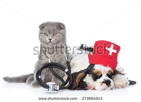 Vets Stock Photos, Images, & Pictures | Shutterstock