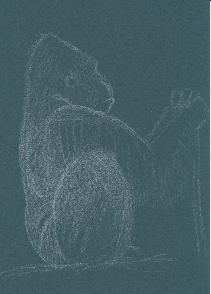 Berggorilla man