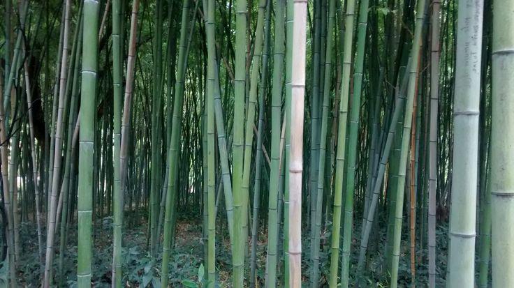 Jardin des plantes de Montpellier Jardín botánico de Montpellier