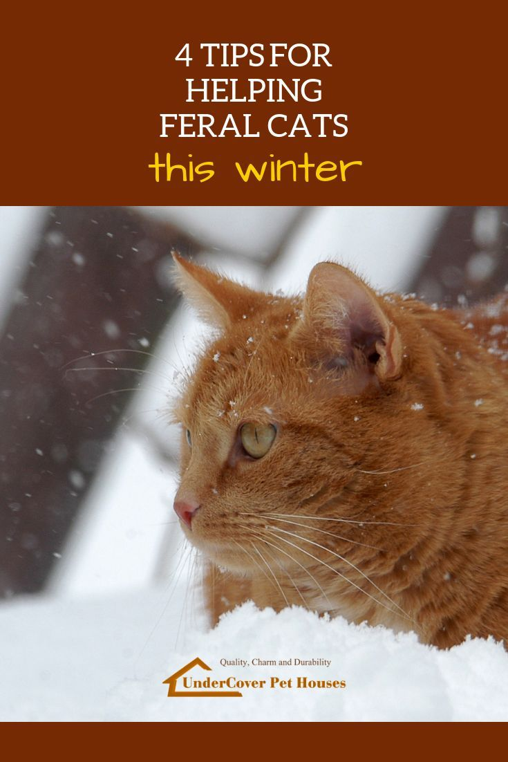4 Tips For Helping Feral Cats This Winter Feral Cats Cats Cat Parenting