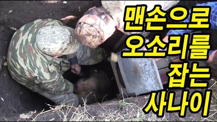 땅굴을 파서 직접 손으로 오소리를 사냥 (feat. 닥스훈트)
