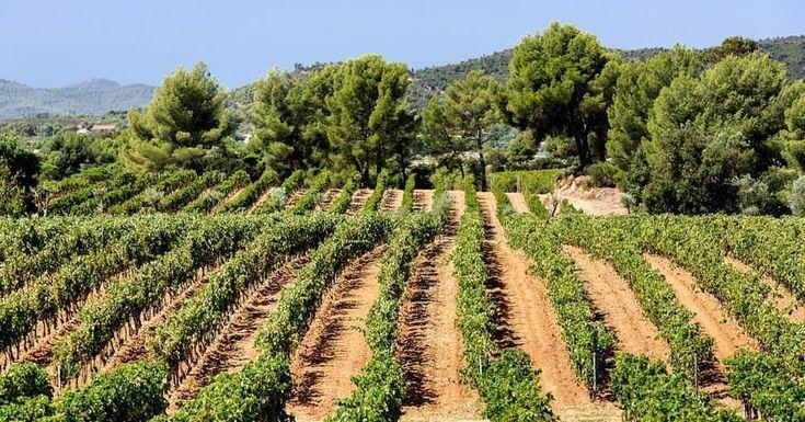 #baccoperbaccofrancia oggi andremo a visitare una #Cantina #Figuière #LaLondelesMaures #CotesdeProvence #Aop #Aoc ● Dedicato ai veri amanti del #vino UN PARADISO TRA TERRA E MARE Tra #Tolone e...