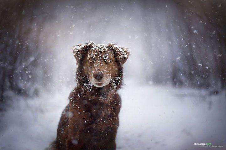 AHUYENTADOR DE GATOS CASERO PETS – ANIMAL LOVERS #mascotas #gatos #animals #animal #pet #cats  #cute #pets #instagood #animales #love #nature #animallovers #pets_of_instagram #petstagram #petsagram #lovely #oceaan #puppylove #pupsofinstagram #puppy #puppies #dogsofinstagram #instapuppy #labradors #goldenpuppy #lassolucionespara