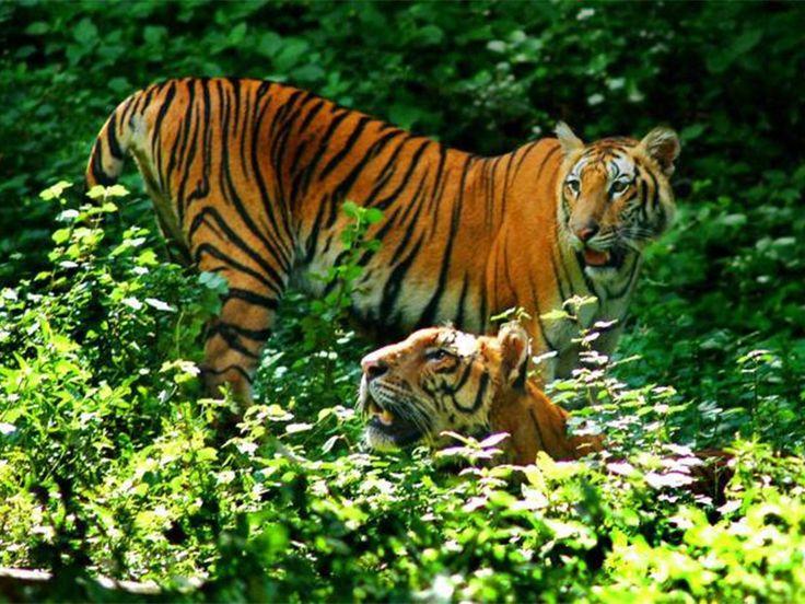 Shendurney Wildlife Sanctuary - in Kollam, Kerala, India