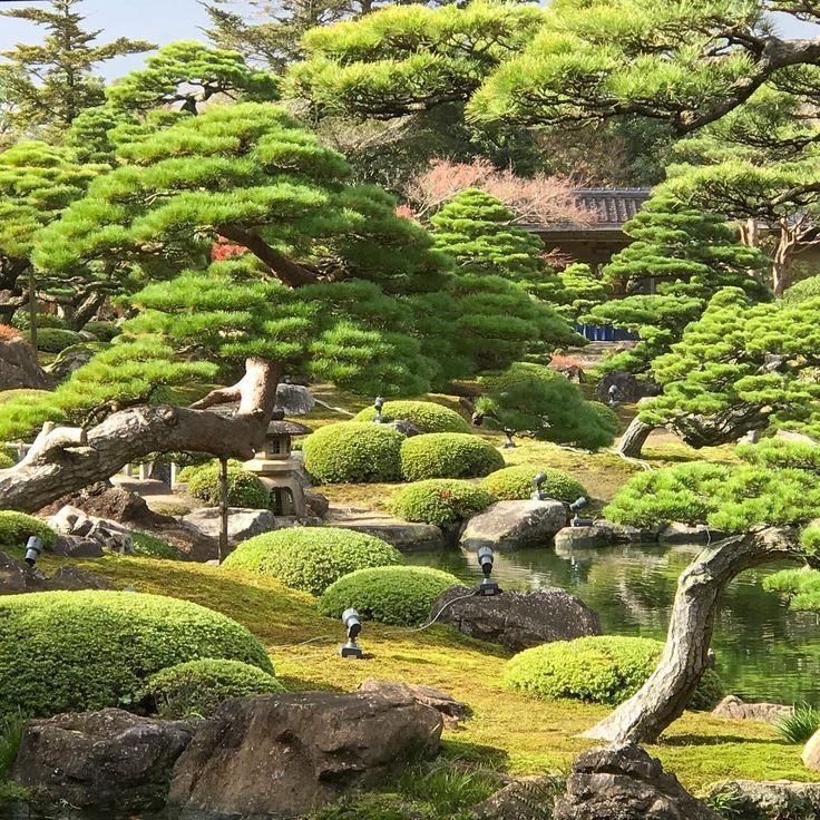 Japanese Inspired Garden In Grant Park: 17 Best Images About Niwaki