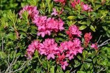 """Résultat de recherche d'images pour """"rhododendron ferrugineum caracteristicas"""""""