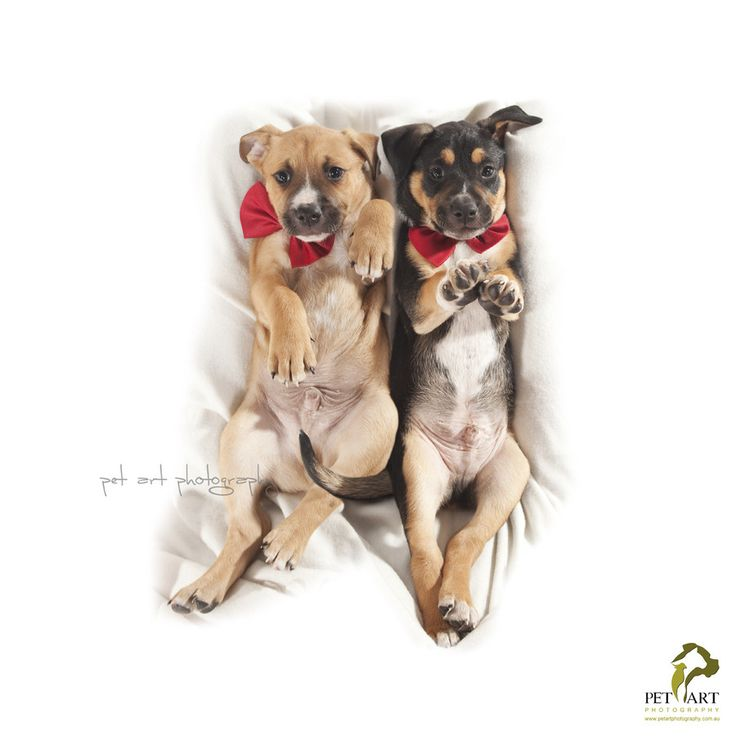 Pet Art Photography in WA, Perth - www.petartphotography.com.au