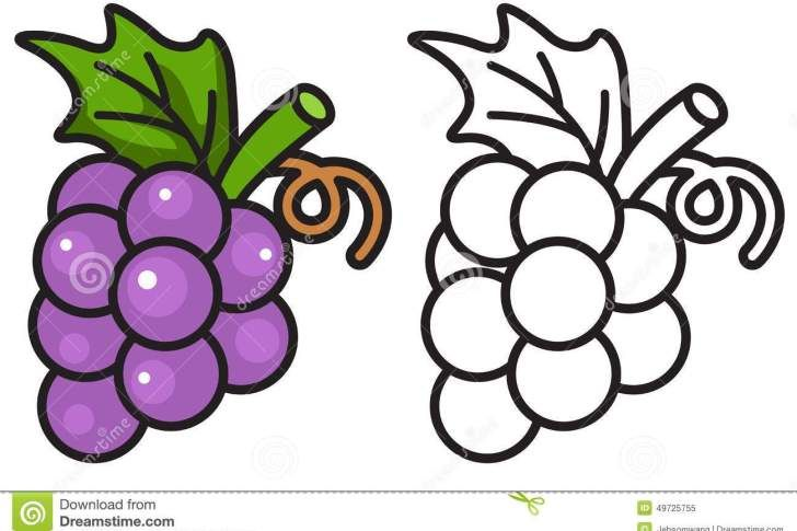 Grape Clipart Coloring Page 7 728 X 485 With Images Coloring