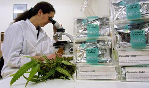 Un biologiste moléculaire explique comment le THC tue complètement le cancer De l'Université Compultense de Madrid, Espagne, le Dr Christina Sanchez a étudié les effets anti-tumoraux du THC, le principal composant psychoactif du cannabis, pendant plus d'une décennie. Elle fournit de l'information saine qui explique exactement comment le THC tue entièrement les cellules cancéreuses –… Lire la suite »