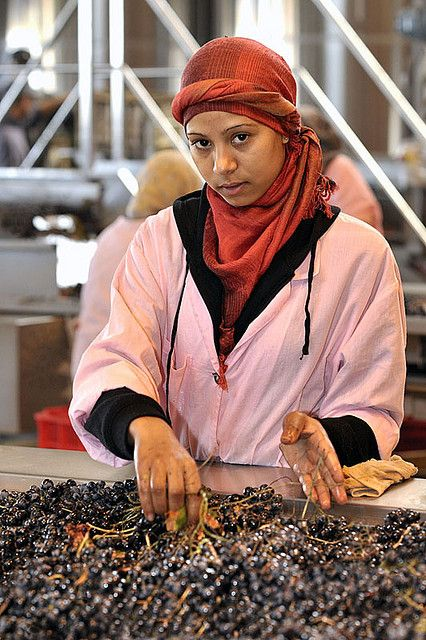 woman processing the grape harvest - Château Roslane, Meknes, Morroco