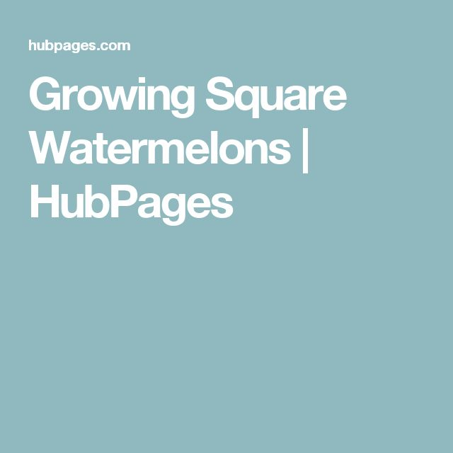 Growing Square Watermelons | HubPages