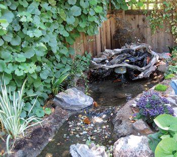 35 best images about backyard ponds on pinterest gardens for Garden stream designs