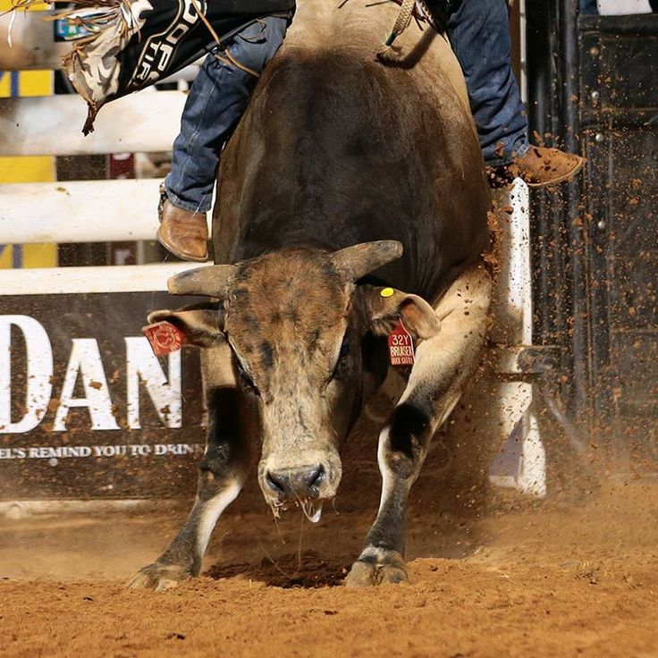 Bruiser Bull Riding And Pbr Pinterest Photos
