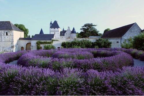Lavender Garden @Chateau du Rivau in Lemere, France. (http://www.loire-castle-rivau.com/gardens/lavender-garden.php; via @gardendesign by Carolyn Mullet)