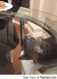 7 Best Cat Gifs of the Week – 12th October 2015