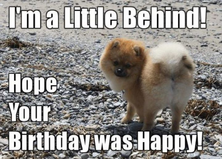 85 Happy Belated Birthday Memes For When You Just Forgot Funny Happy Birthday Meme Happy Belated Birthday Meme Belated Birthday Meme Happy belated birthday meme if the birthday of someone special from your family has just passed and you are unable to wish him well. 85 happy belated birthday memes for