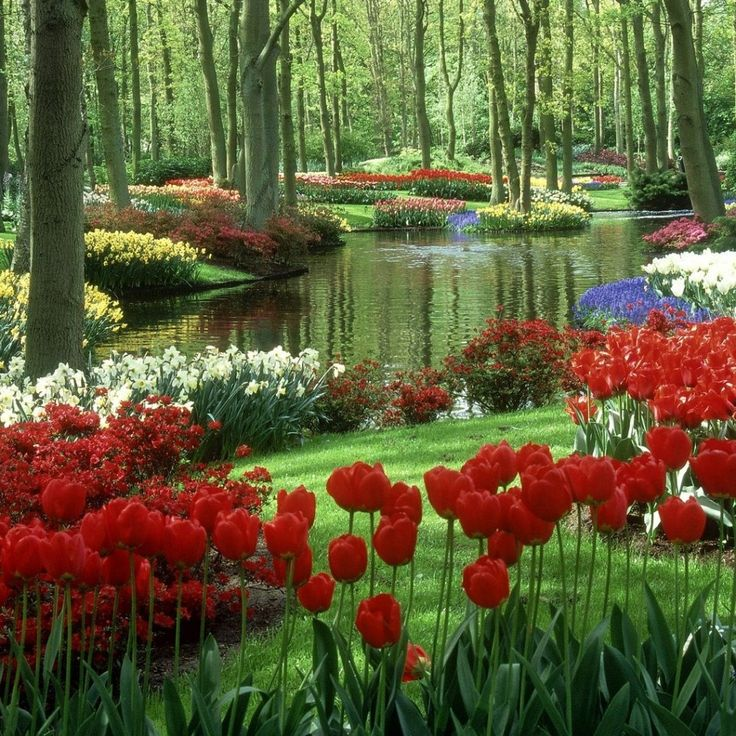scenic new england flower garden plants and