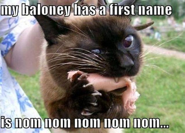 8bd82c8ecd2324fc5c88b3214045dd3c so funny funny cats 442 best all funny cats! images on pinterest funny cats, funny,Bologna Meme