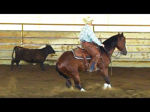 Training a Horse on Cattle - cutting horse - ranch sorting - reined cow horse - YouTube