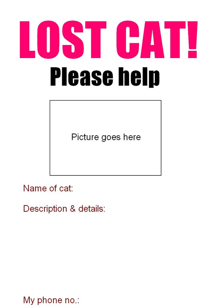 ... Best 25+ Lost Cat Poster Ideas On Pinterest Iconic Movies   Missing  Person Poster Template ...  Missing Person Poster Template