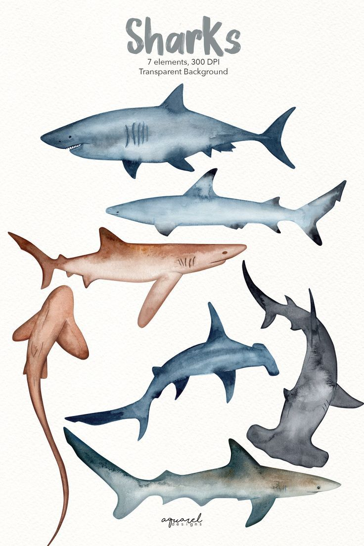 Photos Show Stingrays And Sharks Hunting In Crystal Clear Water In 2020 Shark Illustration Shark Painting Shark Art