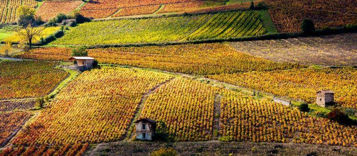 Vino-Francia