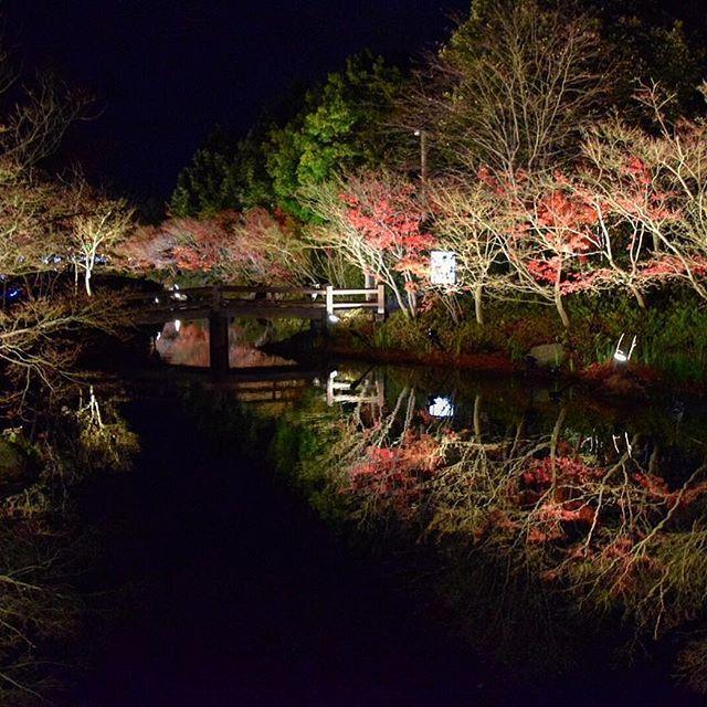 Instagram【104kaz_ok】さんの写真をピンしています。 《これはUPしておきたかった #今年の写真今年のうちに . #鏡池 #なばなの里 #紅葉 #反射 #池 #イルミネーション #夜景 #三重 #桑名 #冬 #illumination #autumnleaves #reflection #pond #orange #nightview #winter #nabananosato #instaphoto》