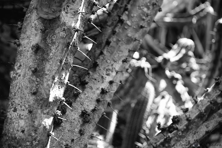 Cactus by Leo Saavedra on 500px