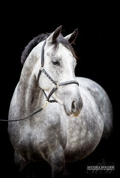 Classic horse portraits - Monika Bogner Photography - Horse photo and dog photo in Bavaria
