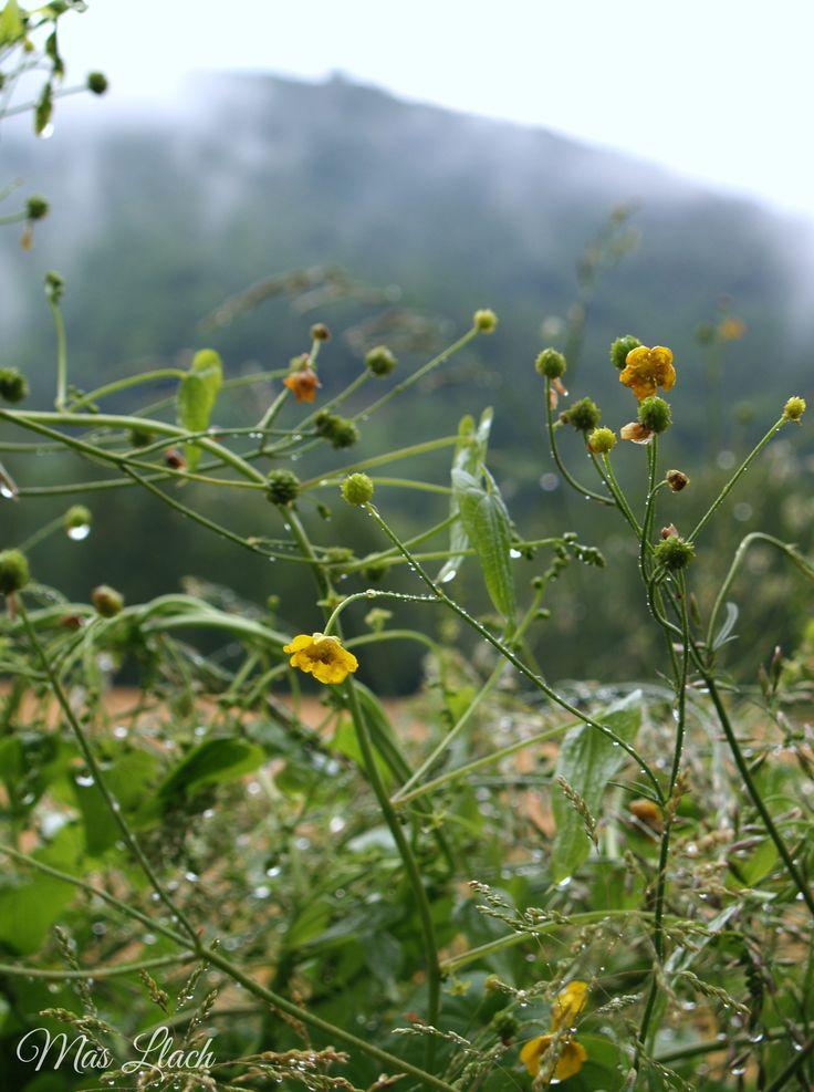 La Vall de Bianya amb pluja també és brillant.