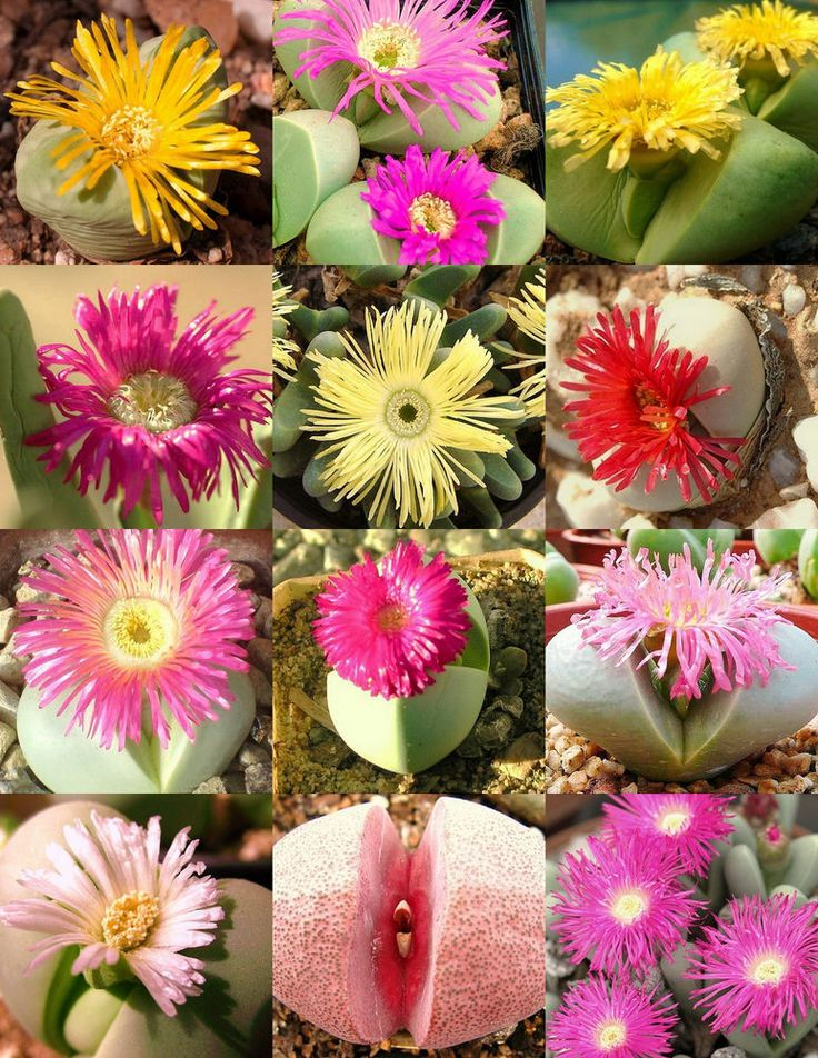 Succulent – learn more about #succulent http://www.growplants.org/plant-life-form/cactus
