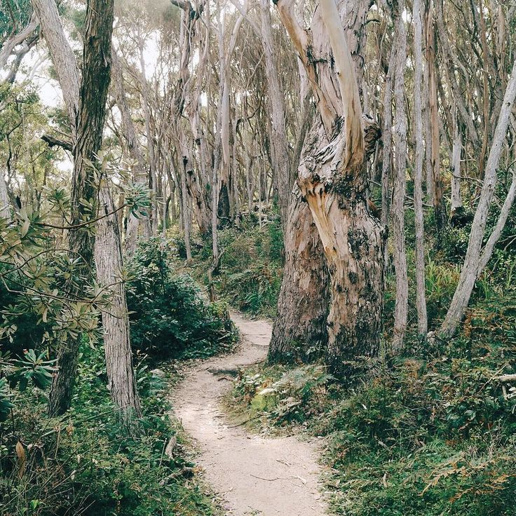 Beautiful trees on the Shipwreck Creek Beach Walk in the Croajingolong National Park  Re-post by Hold With Hope
