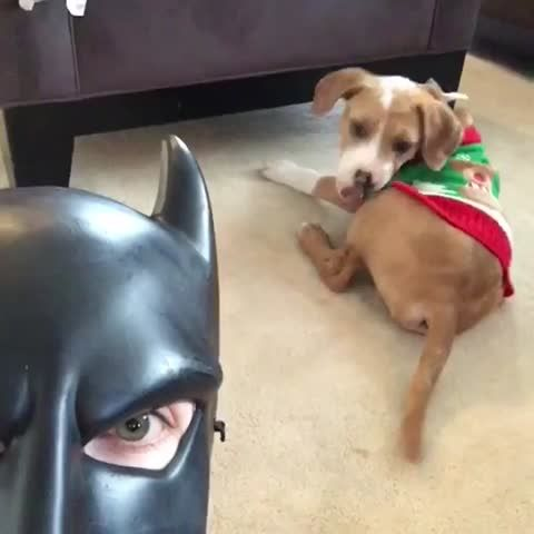 Best 25+ Batdad vine ideas on Pinterest | Batdad video, Vine ...