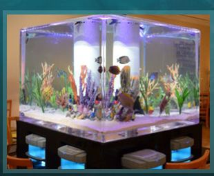 Acrylic Tank Manufacturing of Las Vegas, Nevada. Custom Acrylic Aquariums, Pool Panels, Water Features and Exhibits. Maybe for the future Dr.s Office!