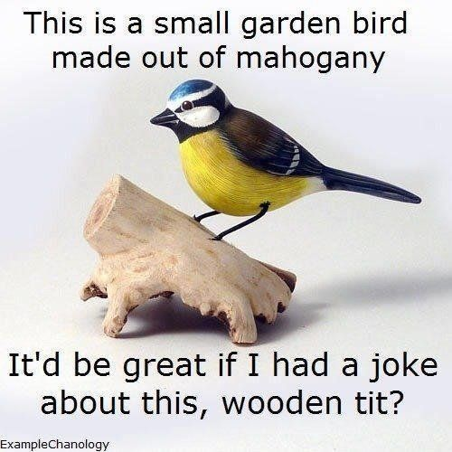 47 Best Bird Watching Jokes Images On Pinterest  Funny -5100