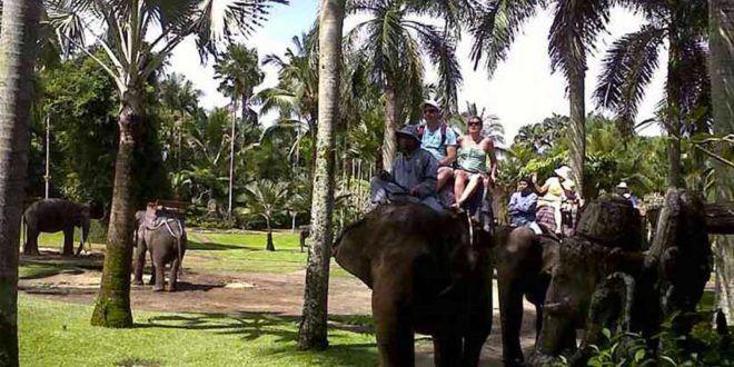 Bali White Water Rafting and Elephant Safari Ride Package #elephantride #rafting #elephanttrek #elephanttour #elephant
