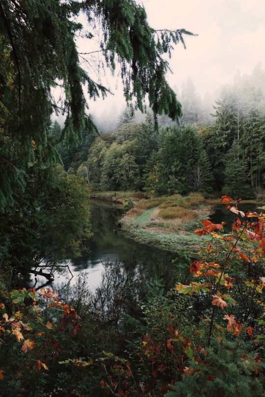 nature scene // forest // nature // aesthetic // wilderness // photography…