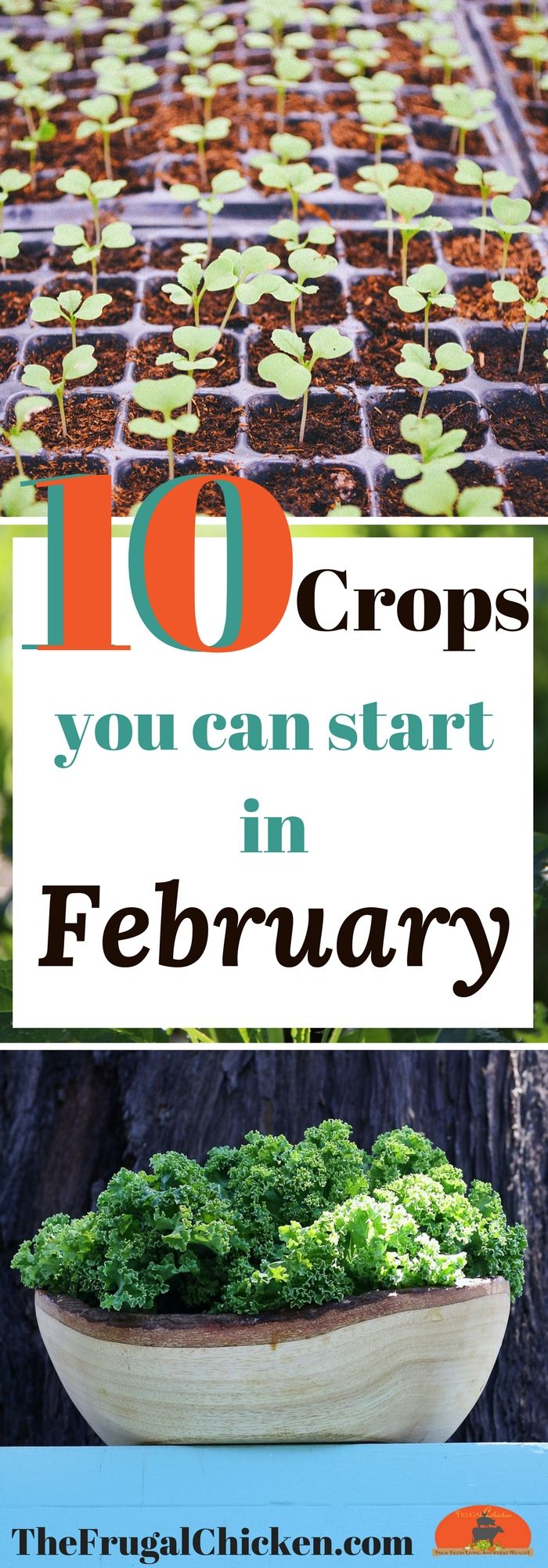 It's not quite spring yet. but you're ready for gardening season, right? Here's 10 crops you can start from seed in February to scratch the itch!
