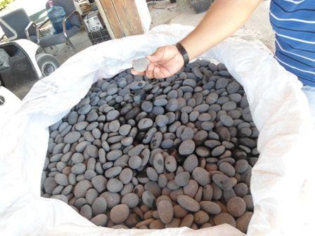 Wholesale Plant Nursery Supplies and Materials - Mexican Beach Pebble Wholesale Stone Beach Pebbles Homestead Nursery Supplies #MexicanBeachPebble  RealPalmTrees.com -1888-778-247six