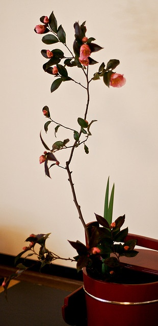 Ikebana       - Plant Life!