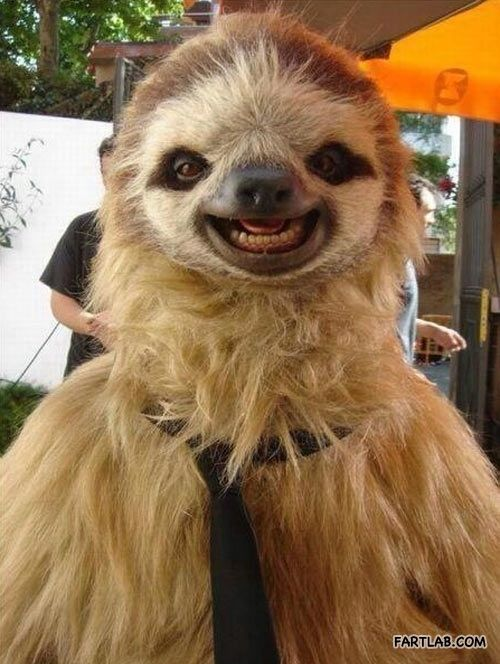 A very photogenic sloth. Holy f*&*#$&*. Please, God, let this be real.
