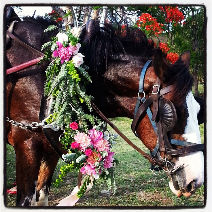 Beautiful Clydesdale in harness with a simple bouquet of flowers