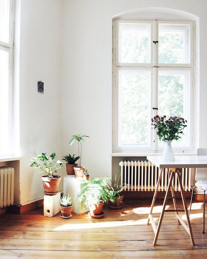 82 besten #zimmerpflanzen bilder auf pinterest | zimmerpflanzen ... - Skandinavisch Wohnen Wohnzimmer