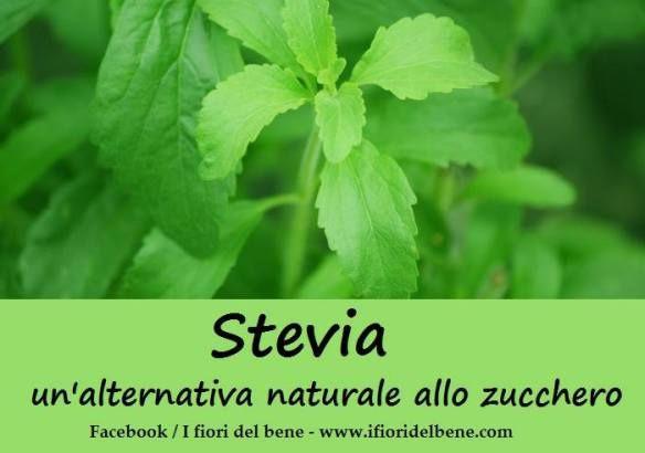 Stevia , l'alternativa allo zucchero #stevia #coltivare #coltivarelastevia #garden #gardening #usarelastevia #giardinaggio #giardino