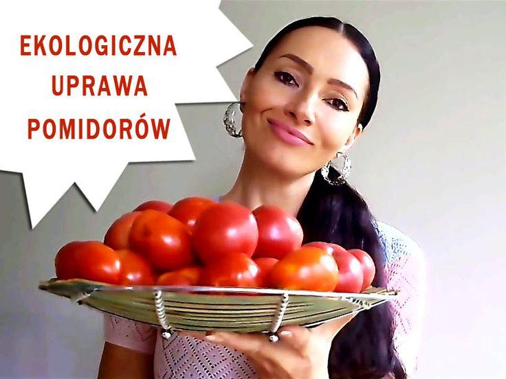 Ekologiczna uprawa pomidorów jest jak najbardziej możliwa czego dowodem są moje obfite, tegoroczne i nie tylko, zbiory. Sprawdź jak to robię!  #rytmynatury #pomidory #tomato #tomatoes #vege #fit #vegetables #warzywa #ogród #garden #eko #organic
