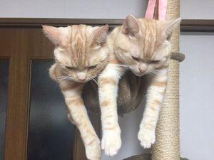 ネコはハンモックが似合いすぎるw~色んなポーズが和むよ - NAVER まとめ