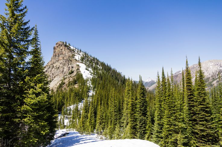 6 Day Hikes in Fernie, BC. Hiking Hosmer Mountain. Photo by Dan Kilgallon.