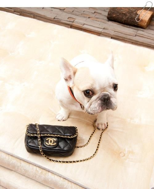 Buldog Frances & Chanel