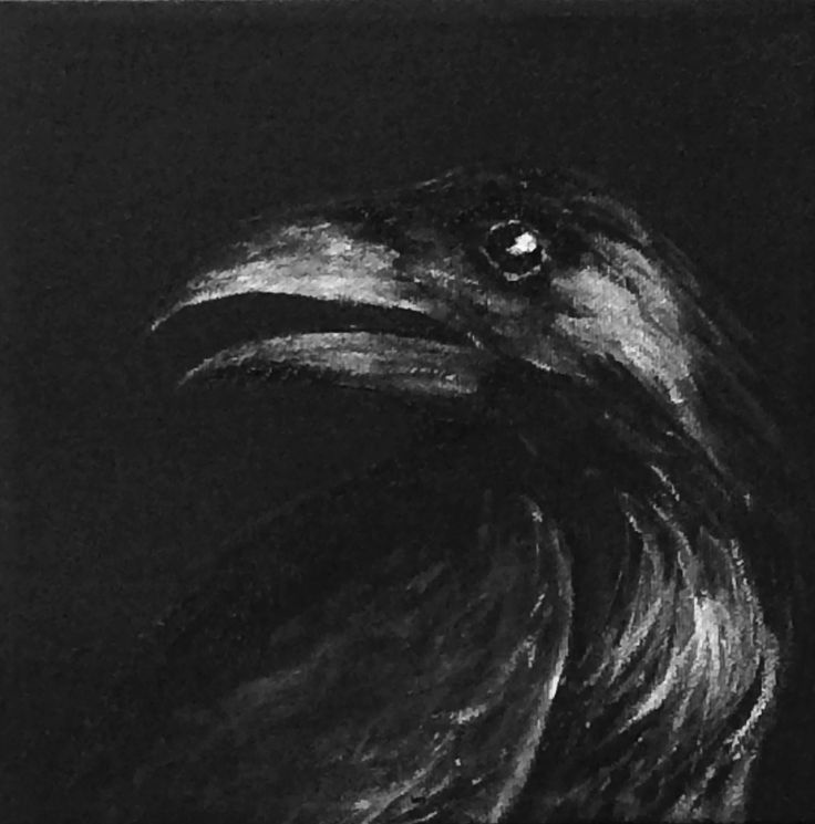Raven acrylic shades of black